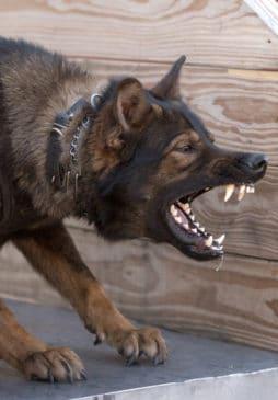 Edmonds Dog Bite Lawyer