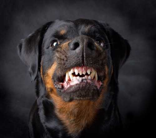 Proving Your Dog Bite Claim