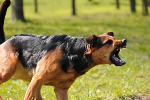 Strict Liability in Dog Bite Claims